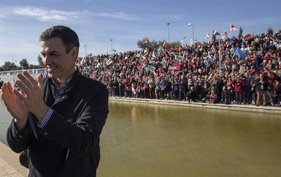 Primarias del PSOE: ¿Un árbol sin raíces?